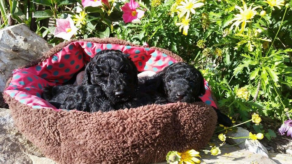 Bébés femelles - photo prise le 14.05.16