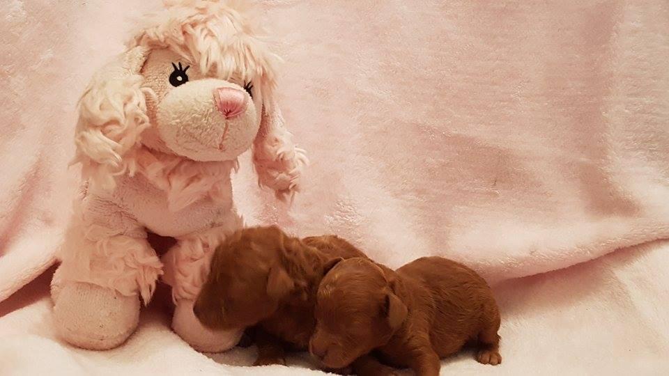 bébés femelles portée Hanika - photo prise le 17.03.17