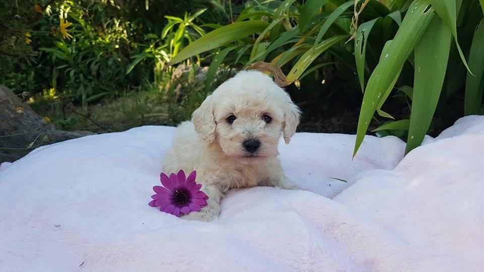 Femelle fleur violette - photo prise le 14.05.17