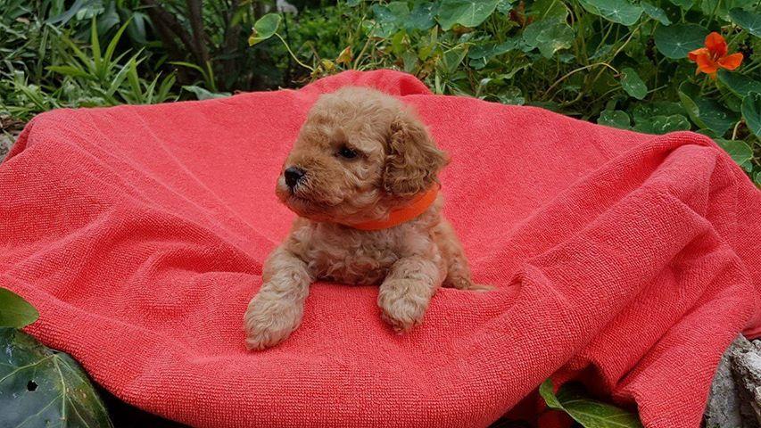 femelle collier orange - photo prise le 26.06.17