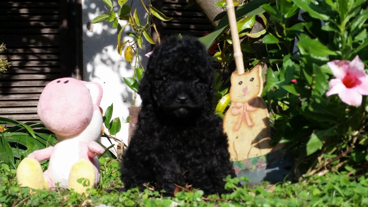 femelle noir - photos prise le 14.11.15