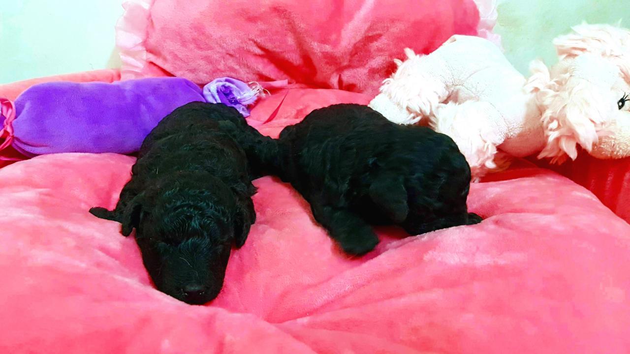 Bébés femelles - portée Gucci - photo prise 01.12.17