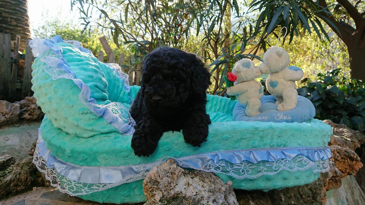 portée Gucci - bébé mâle - photo prise le 21.12.17