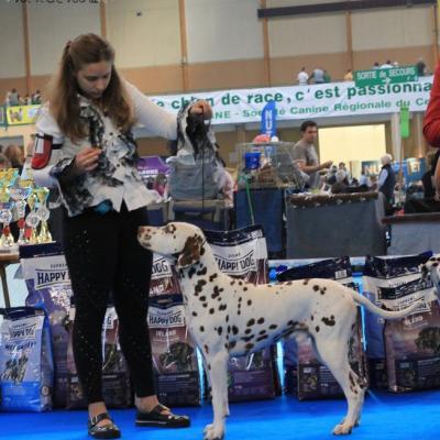 Chywen - Exposition Orléans Nationale d'élevage dalmatien 2010