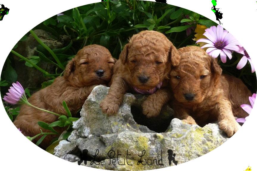 Bébés abricots