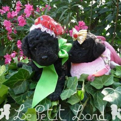 Bébés noir (femelles)