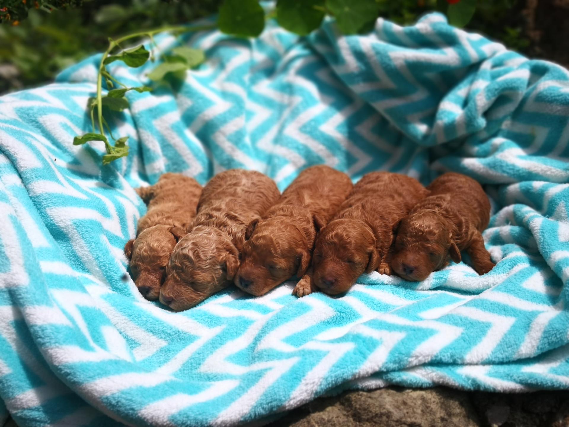 Bébés mâles - photo du 28.05.19