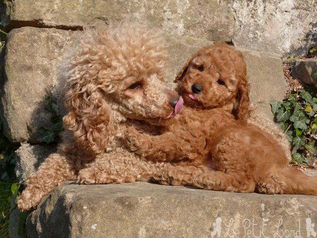 Hey Cookie (à famille Retali) avec sa Maman French Kiss