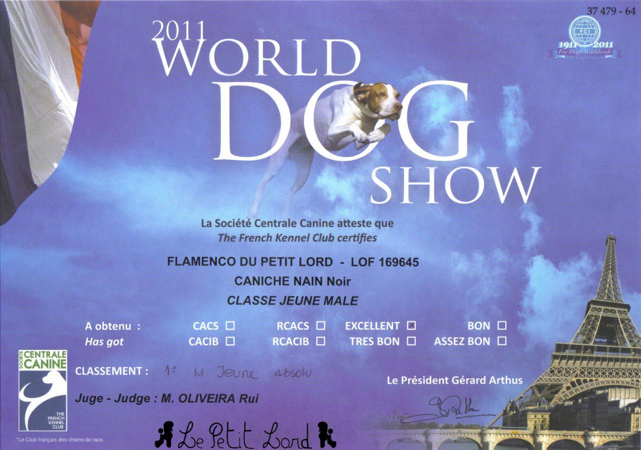 Flamenco - Diplôme Meilleur Jeune World Dog Show le 10.07.11