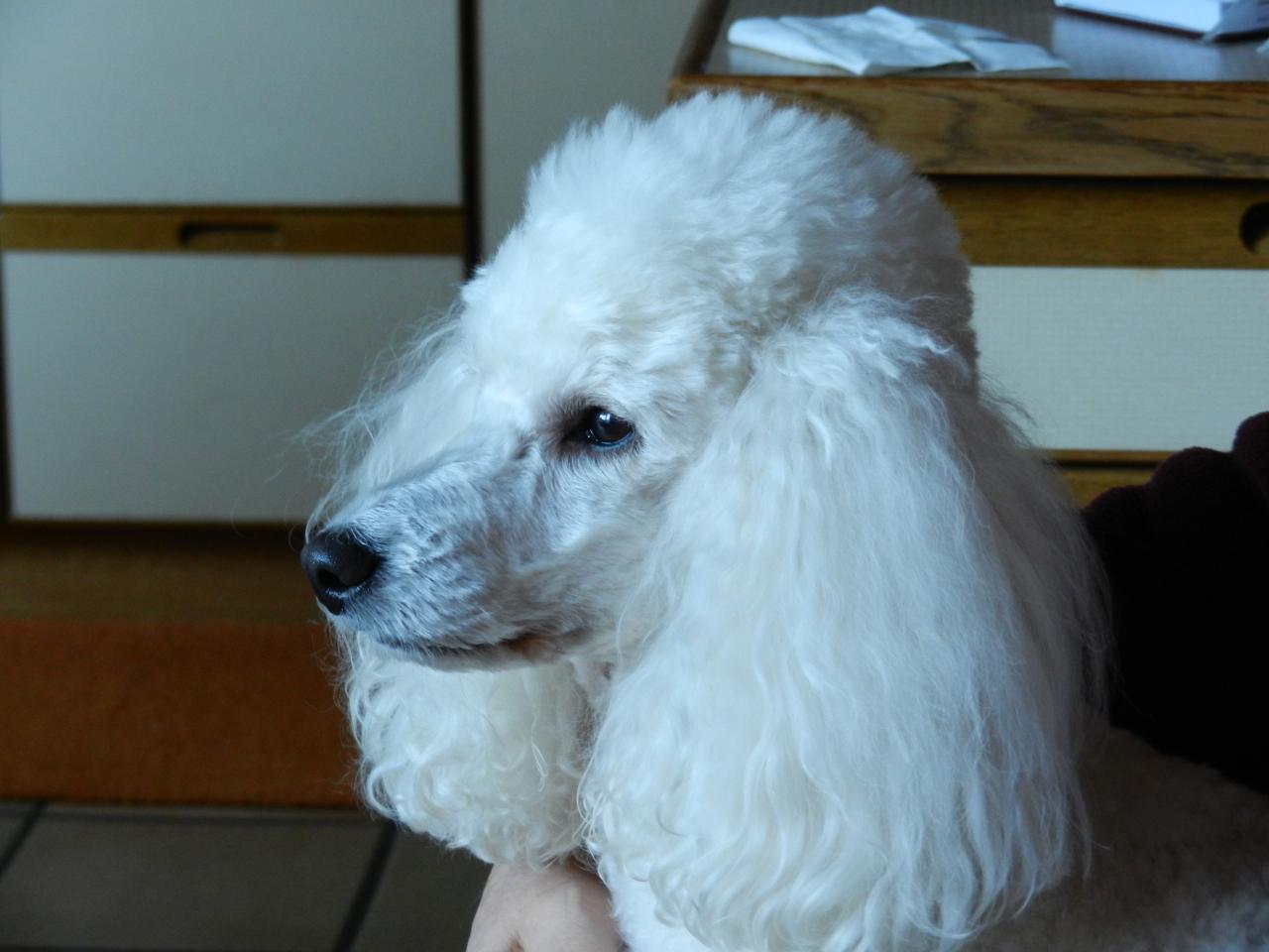 Casper dit Dali (famille van-velthem)