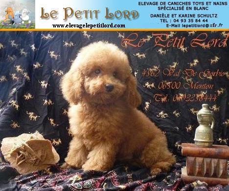élevage Le Petit Lord (affiche)