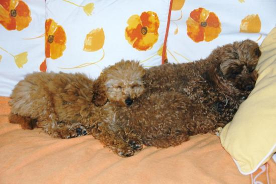 Fibie & Vickie (famille Viennet)