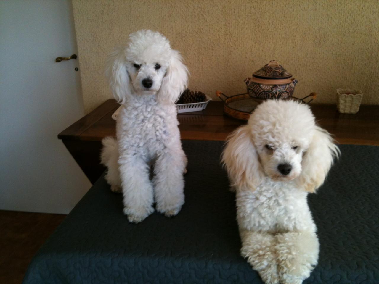 Flower & Fabio (famille Signoret)