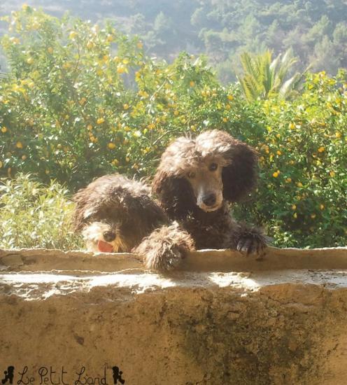 Gianni et Gringo - le 27.02.12