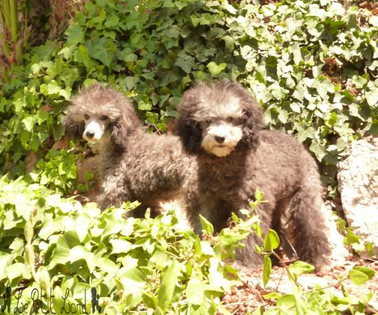 Hudson et Hunter - le 16.07.12