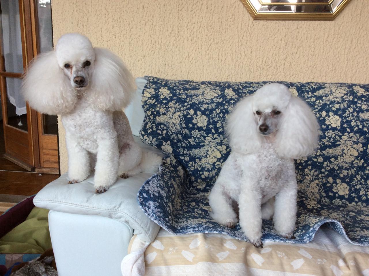 Flower et Fabio (Famille Signoret)