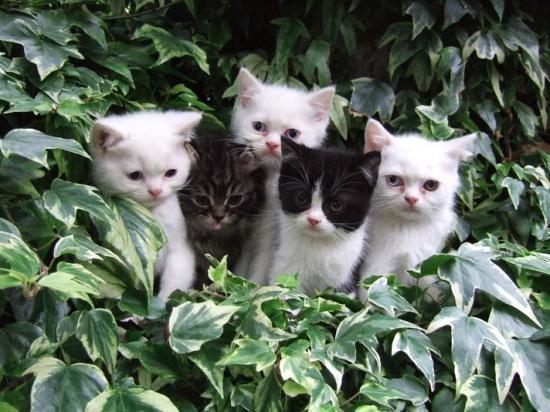 la famille chatons