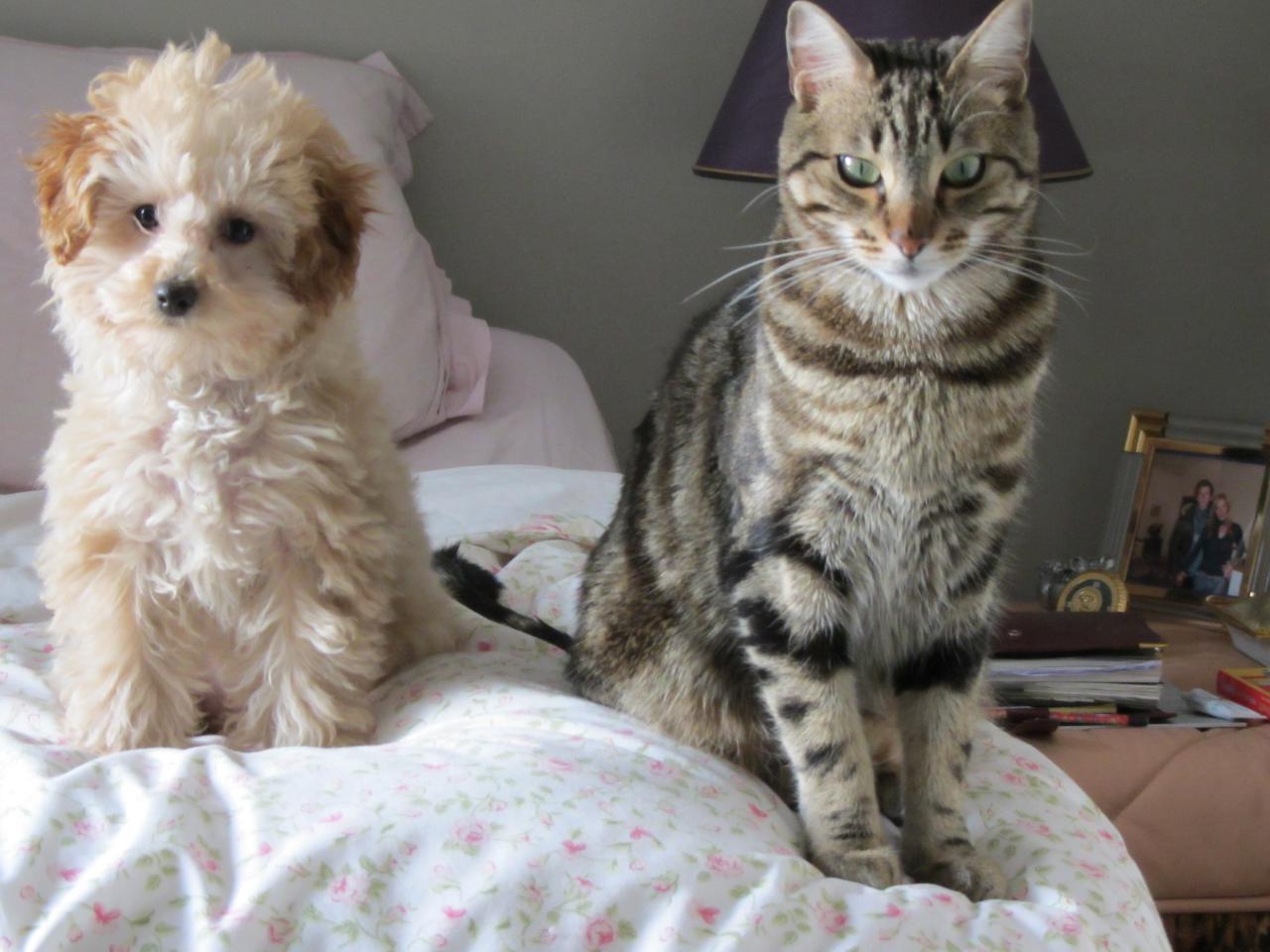 Ginger dite Myli avec son copain Puma (famille Dreyfus)