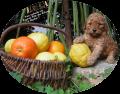 Joyeuse fête des citrons ! Hey Cookie (à famille Retali)