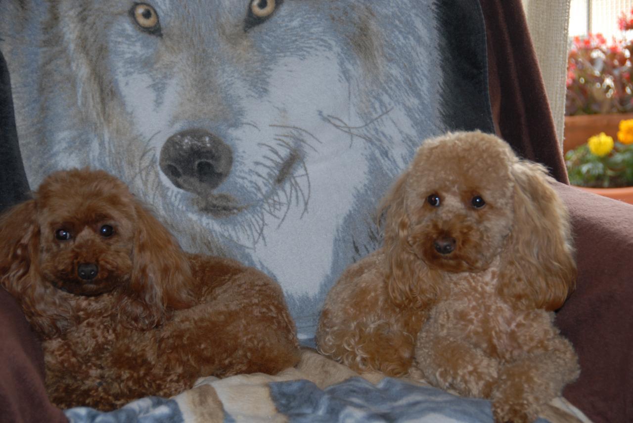 Vicki et Fibie (famille Viennet)