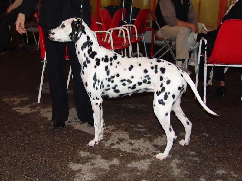 Dolce - Exposition de Monaco 2004