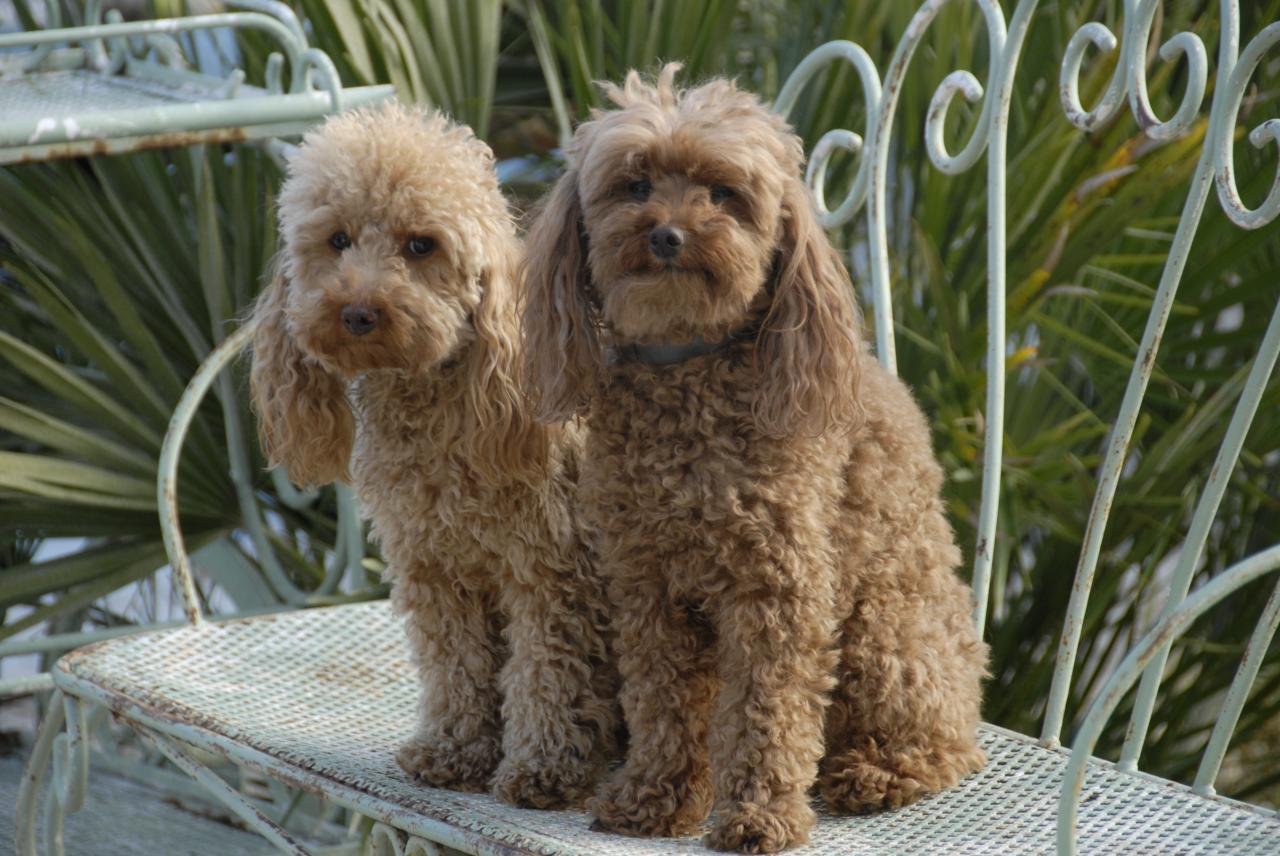Fibie et Vicki (famille Viennet)
