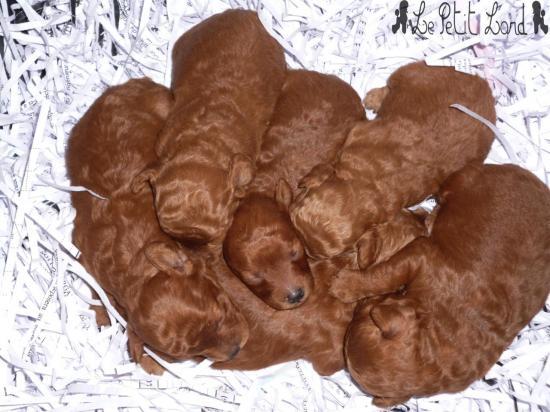 Bébés fauves-rouge (mâle et femelles)