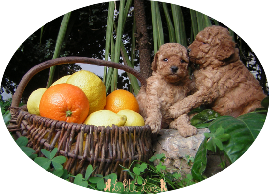 Honey et Hey Cookie (aux familles Palahi et Retali)