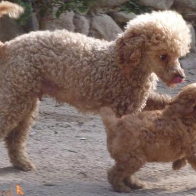 Honey (à famille Palahi) avec sa Maman French Kiss