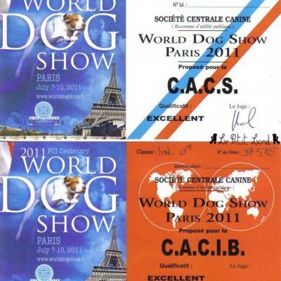 Shadow - Cartons Mondiale CACS + CACIB le 10.07.11